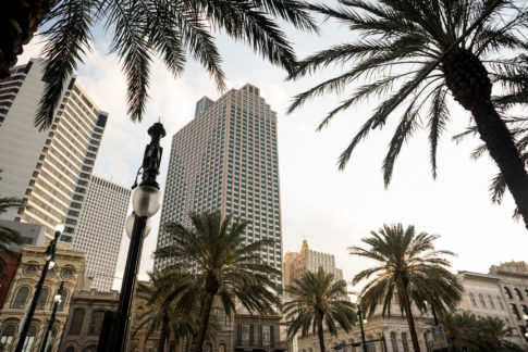 Palmeras Nueva Orleans