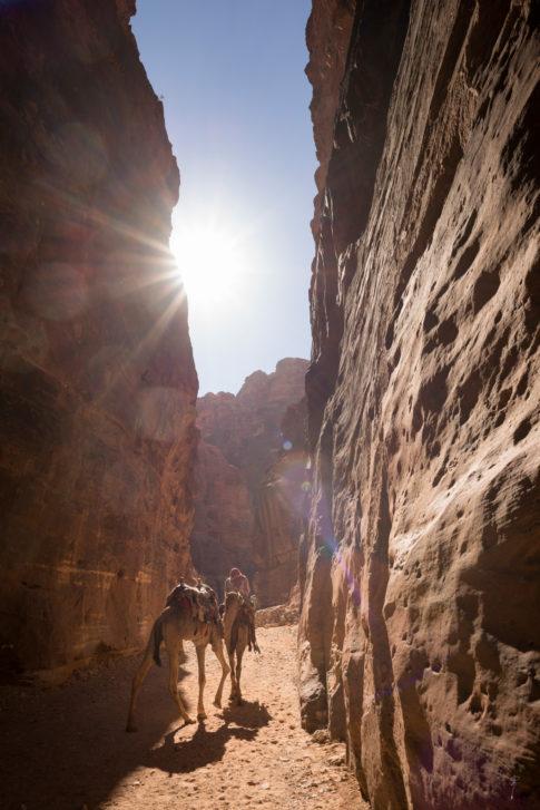 Camellos camino de Petra